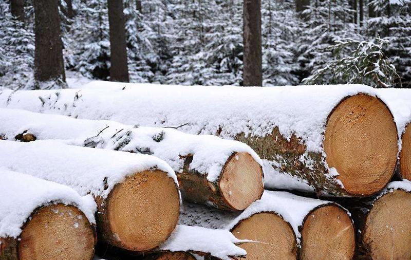 世界各国市场趋势 各品类原木价格一览