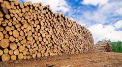 木材为什么会变色?